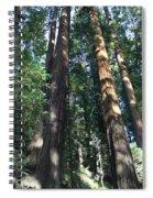 California Redwood Spiral Notebook