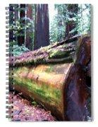 California Redwoods 2 Spiral Notebook