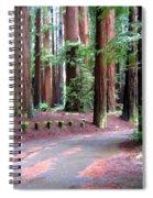 California Redwoods 3 Spiral Notebook