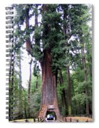 California Redwoods 6 Spiral Notebook