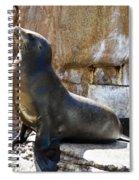 California Sea Lion Spiral Notebook