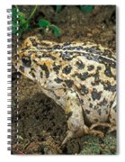 California Toad Bufo Boreas Halophilus Spiral Notebook