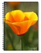 Californian Poppy Spiral Notebook
