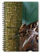 Caligo Atreus Spiral Notebook