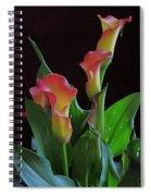 Calla Lilies 2  Spiral Notebook