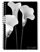 Calla Lilies In Triplicate In Black And White Spiral Notebook