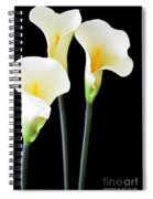 Calla Lilies In Triplicate Spiral Notebook