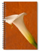Calla Lily In Bloom Spiral Notebook