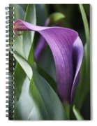 Calla Lily In Purple Ombre Spiral Notebook