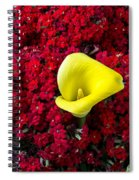 Calla Lily In Red Kalanchoe Spiral Notebook