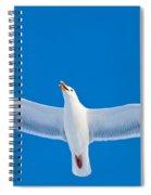 Calling Herring Gull Flying In Blue Sky Spiral Notebook