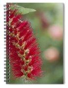 Callistemon Citrinus - Crimson Bottlebrush Spiral Notebook