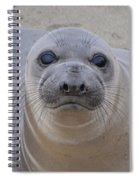 Cambria Baby Seal Spiral Notebook