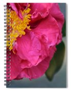 Camellia With Bee Spiral Notebook