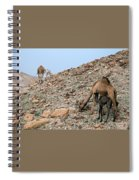 Camels At The Israel Desert -1 Spiral Notebook