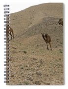 Camels At The Israel Desert -2 Spiral Notebook