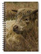 Camouflaged Cow Spiral Notebook