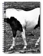 Camp Horse Spiral Notebook