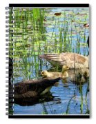 Canada Geese On Lily Pond At Reinstein Woods Spiral Notebook