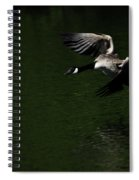 Canada Goose In Flight Spiral Notebook