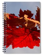 Canadian Maple Leaves In The Fall Spiral Notebook