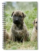 Canary Dog Puppies Spiral Notebook