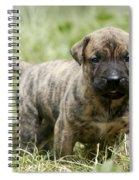 Canary Dog Puppy Spiral Notebook