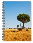 Candelabra Trees Spiral Notebook