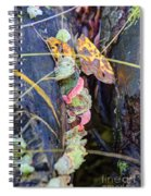Candied Fungus Spiral Notebook
