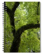 Canopy Of Cedar Elm Spiral Notebook