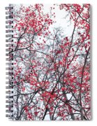 Canopy Trees Spiral Notebook
