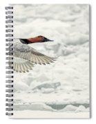 Canvasback Duck In Flight Spiral Notebook