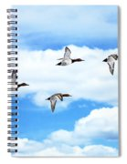 Canvasback Ducks In Flight Spiral Notebook