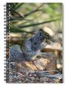 Canyon Squirrel Spiral Notebook