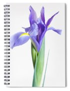 Captivate Spiral Notebook