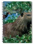 Capybara And Jacana Spiral Notebook