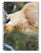 Caracal About To Jump Spiral Notebook