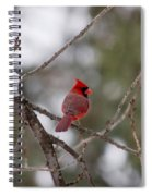 Cardinal - A Winter Bird Spiral Notebook