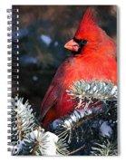 Cardinal And Evergreen Spiral Notebook
