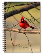 Cardinal Beauty Spiral Notebook
