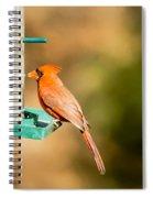 Cardinal Bird At Bird-feeder Spiral Notebook