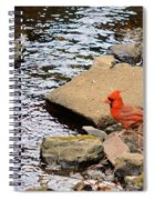 Cardinal By The Creek Spiral Notebook