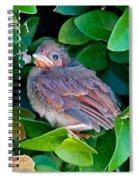 Cardinal Chick Spiral Notebook