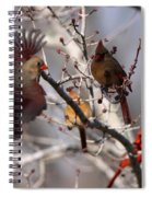 Cardinal Colony Spiral Notebook