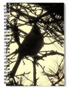 Cardinal Contour Spiral Notebook