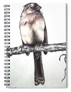 Cardinal Female Spiral Notebook