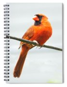 Cardinal I Spiral Notebook