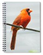 Cardinal II Spiral Notebook