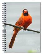 Cardinal IIi Spiral Notebook