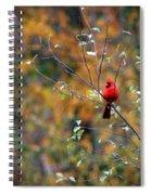 Cardinal In Autumn Spiral Notebook